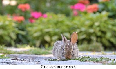 schattig, konijntje
