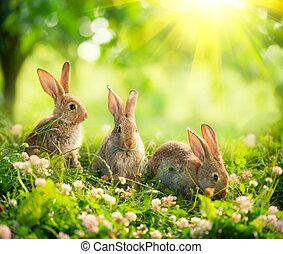 schattig, weinig; niet zo(veel), bunnies, kunst, weide, rabbits., ontwerp, pasen