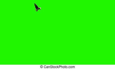 scherm, vliegen, adelaar, -, groene, cirkels