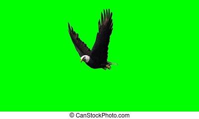 scherm, vliegende adelaar, aanzichten, -, groene, anders, 2