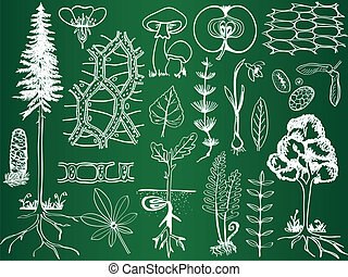 schetsen, plantkunde, biologie, school, -, plant, illustratie, plank