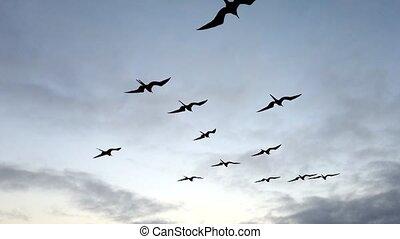 schieten omhoog, volgende, scheepje, fregat, vogels