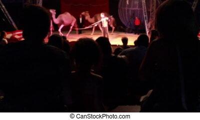 schouwend, circus, mensen