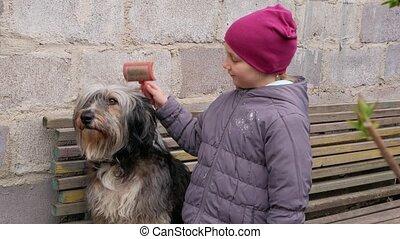 schuilplaats, het geven, groot, het kammen, straat, adoptie, dog., sheepdog, witte , canine, comb., laagland, wol, bench., pet., kind, black , pluizig, liefde, houten, thick-coated, pools, dakloos, bastaard, supportng, care, lang, concept.