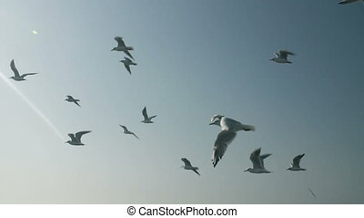seagulls, vlucht, hemel