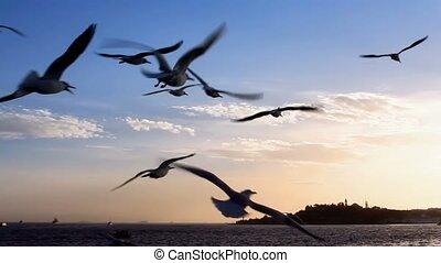 seagulls, vlucht