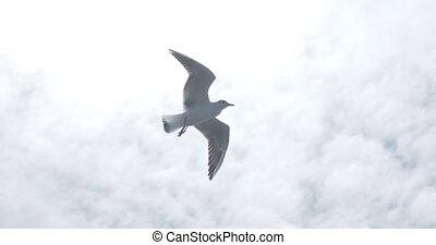 seagulls, weer, vliegen, sky., goed, blauwe , sterke, wind.