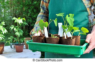 seedlings, koppen