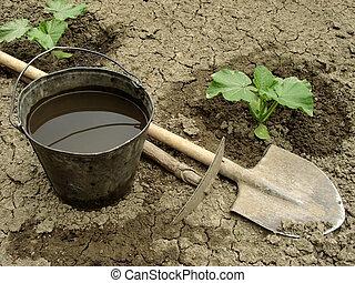 seedlings, pompoen