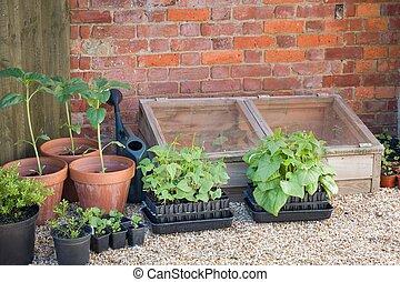 seedlings, tuin, groente, groeiende, uk