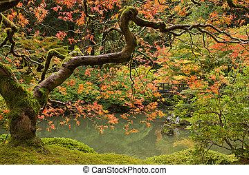seizoen, herfst, 2, tuin japanner