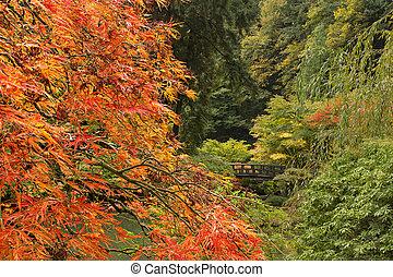 seizoen, herfst, japanse tuin