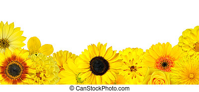 selectie, bodem, vrijstaand, gele bloemen, roeien