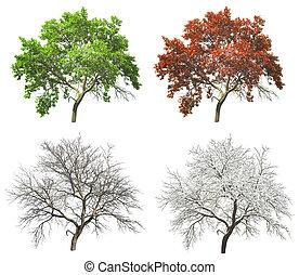 set, boompje, vrijstaand, vier, achtergrond, jaargetijden, witte