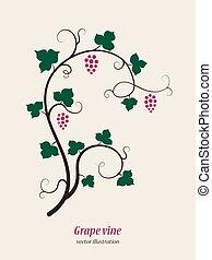 set., druif, wijngaarden