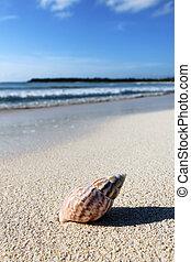 shell strand