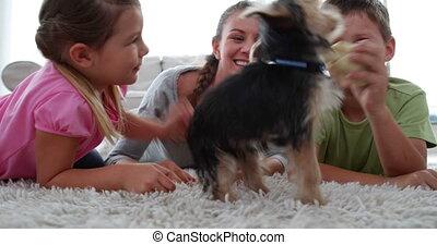 siblings, spelend, puppy