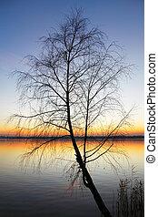 silhouette, boompje, ondergaande zon