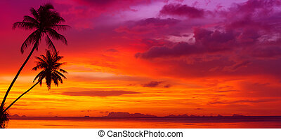 silhouette, panorama, op, bomen, oceaan, tropische , ondergaande zon , palm