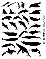 silhouettes, vector, mammals., zee, illustratie