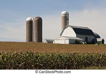 silos, schuur, cornfield
