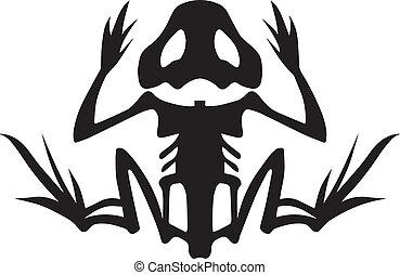 skelet, kikker