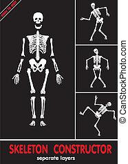 skeleton., l, gebeente, menselijk, afwerpen