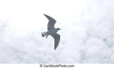 sky., vliegen, seagulls, weer, sterke, goed, blauwe , wind.