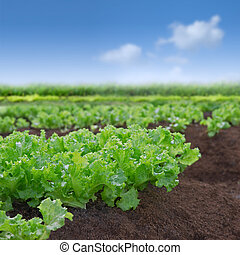 sla, organisch, tuin