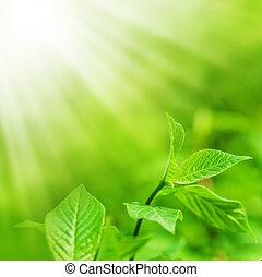 spase, bladeren, fris, kopie, groene, nieuw