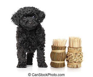 speelbal, poedel, puppy