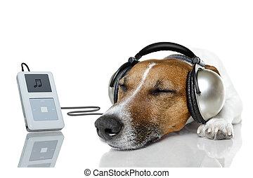 speler, muziek, dog, luisteren