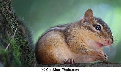 squirrel, eten, boompje