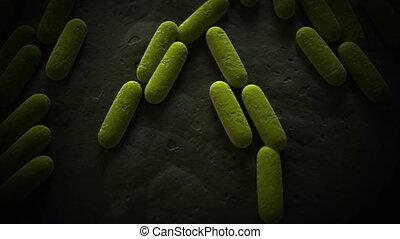 staaf, bacterie, gevormd