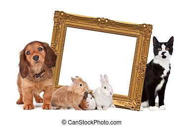 staand, afbeelding, groep, ongeveer, gouden, frame, huisdieren