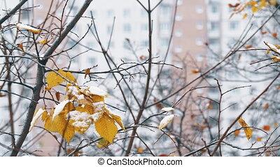 stad, leaves., droog, winter, weinig, boompje, sneeuw