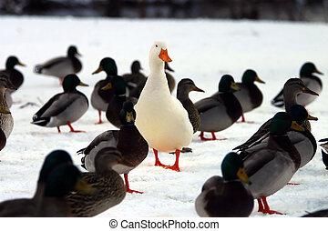 stander, u, crowd?, uit