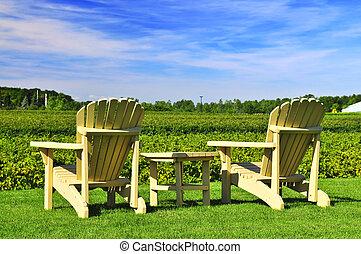 stoelen, wijngaard, het overzien