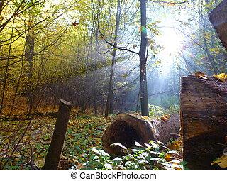straal, zon, magisch, licht, bos
