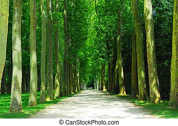 straat, bomen