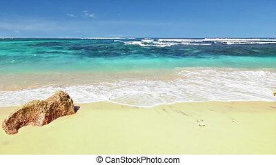 strand, lus, oceaan