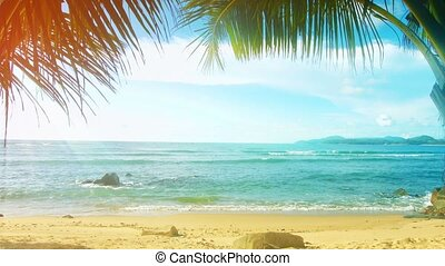 strand, palm, mensen, zonnig, bomen, thailand, island., phuket, zonder