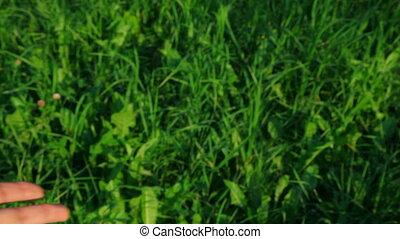 stretching, groen gras, achtergrond, hand