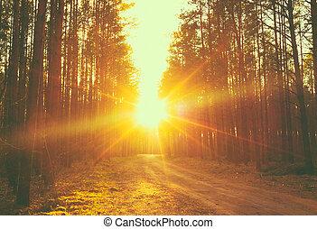 sunbeams, ondergaande zon , bos, straat