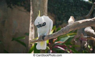 tak, groot, zit, papegaai