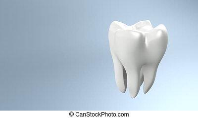 tand, bovenkant, gezondheid