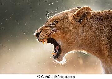 teeth, gevaarlijk, lioness, displaing