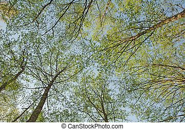 tegen, blauwe hemel, gefotografeerde, bomen, groene, blaasbalg