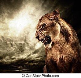 tegen, hemel, gebrul, stormachtig, lioness