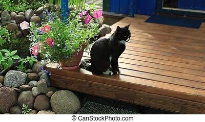 terras, huiselijke kat, black